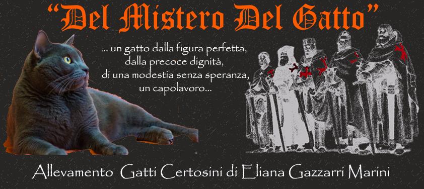Links Contatti Il Gatto Certosino Arriva In Italia Grigio Massiccio Con